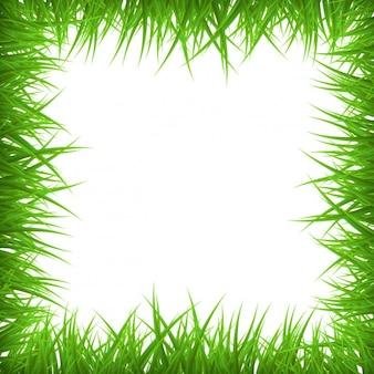 Grass frame background