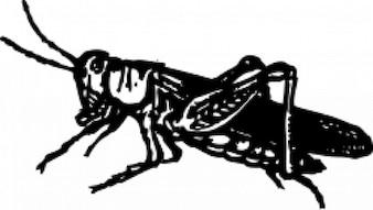 Grasshopper hand drawn