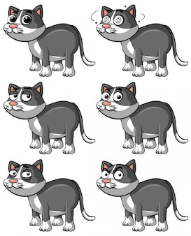 Gray cat with different facial expressions