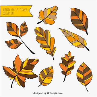 Great autumnal leaves with different colors