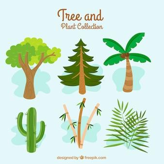 木の異なる種類の素晴らしいコレクション