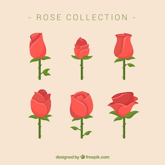 Great pack of roses in flat design