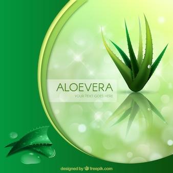 緑の背景とアロエベラ
