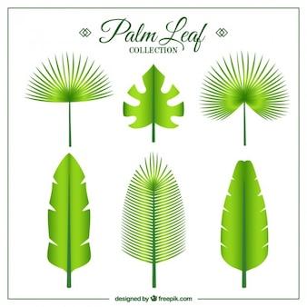 Green exotic leaves set in flat design