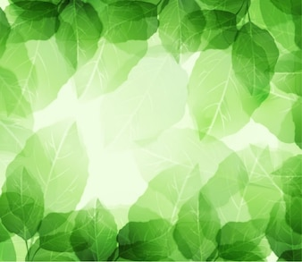 Green leaves and transparencies on background