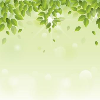 Green leaves background design
