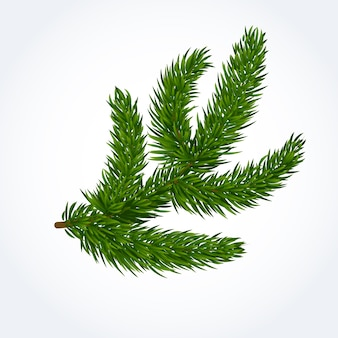 Green tree branch