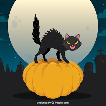 Halloween cat in the cemetery