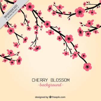 Hand draw pink cherry blossom background