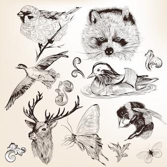 Hand drawn animals collection