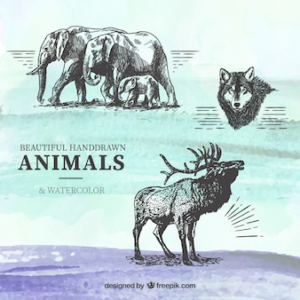 Hand drawn animals on watercolor background