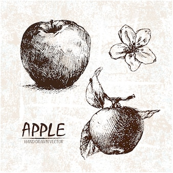 Hand drawn apple design
