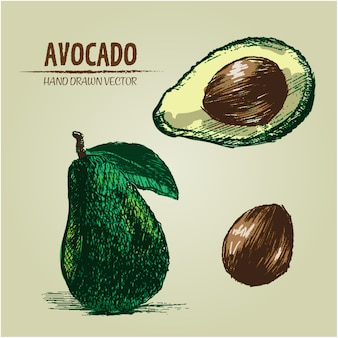 Hand drawn avocado design