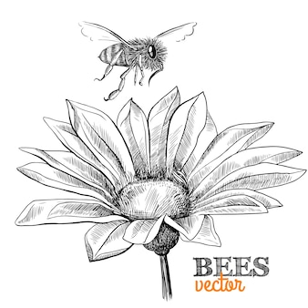 Hand-drawn background with flower and bee