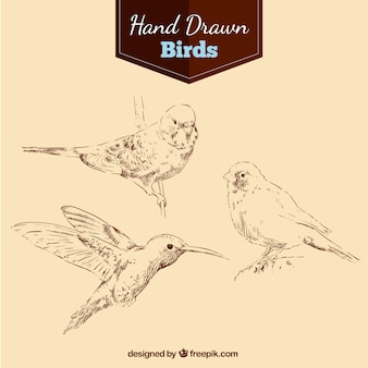 Hand drawn birds pack