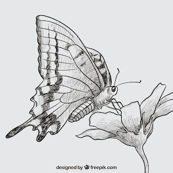 Hand drawn butterfly and flower
