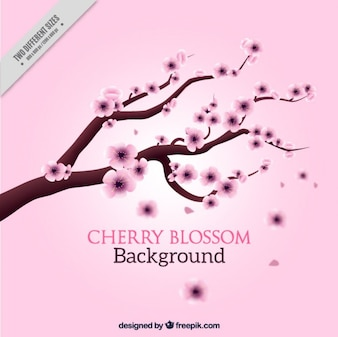 Hand drawn cherry tree on a pink background