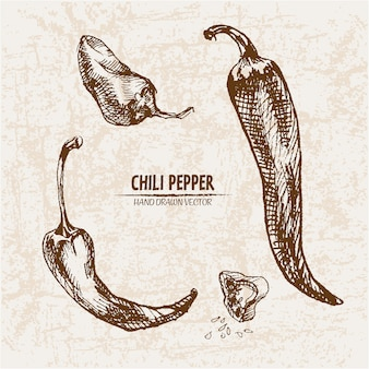 Hand drawn chili peper collection