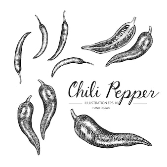 Hand drawn chili pepper collection