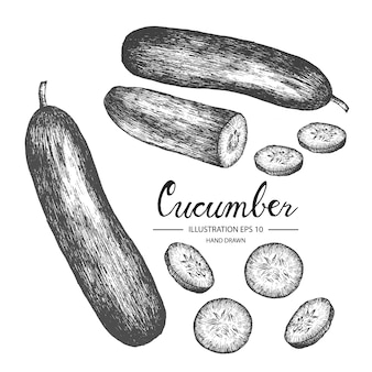 Hand drawn cucumber collection