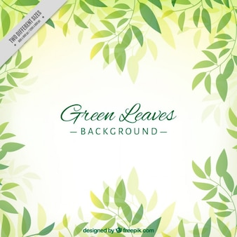 Hand drawn cute green leaves background