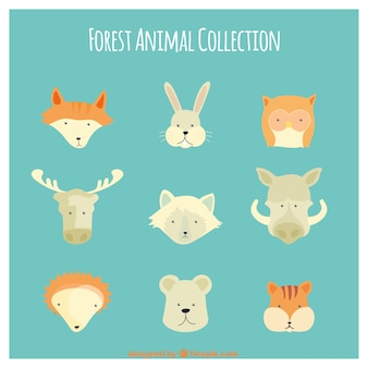 Hand drawn cute wild animal collection