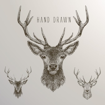 Hand drawn deer collection
