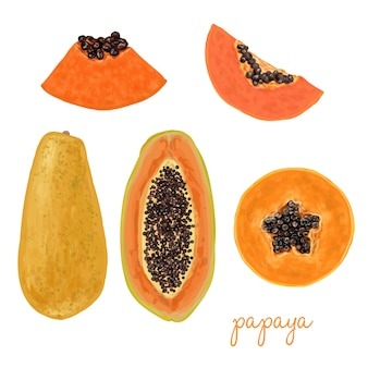hand drawn delicious papaya