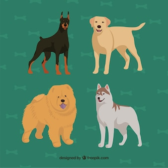 Hand drawn dog breed collection