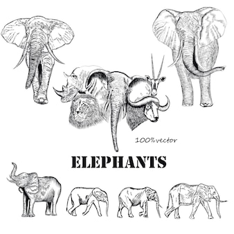 Hand drawn elephants collection