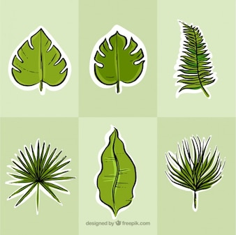 Hand drawn exotic green leaves