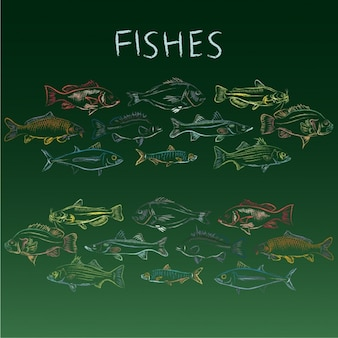 Hand drawn fishes collection