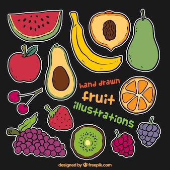 Hand Drawn Fruit Illustration