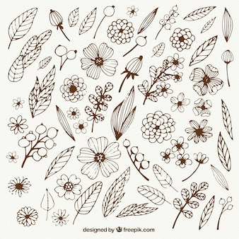 Hand drawn gardening flowers