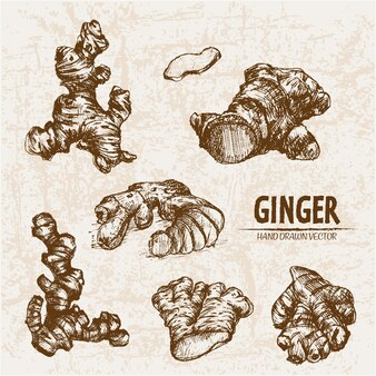 Hand drawn ginger