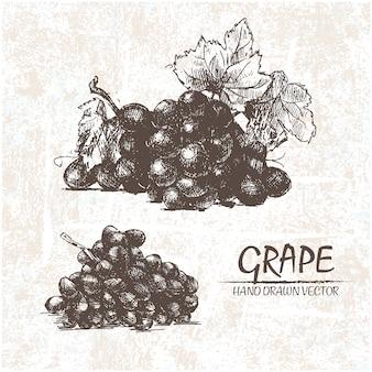 Hand drawn grapes design