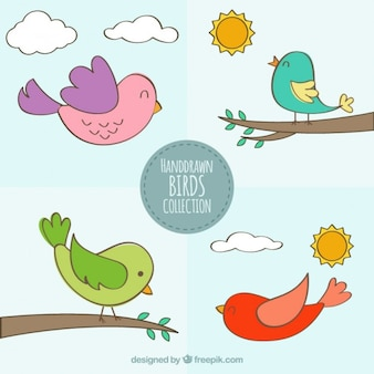 Hand drawn happy birds pack