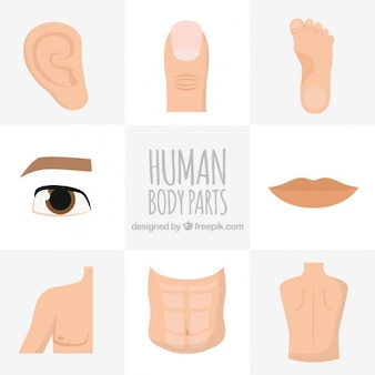 Hand drawn human body parts