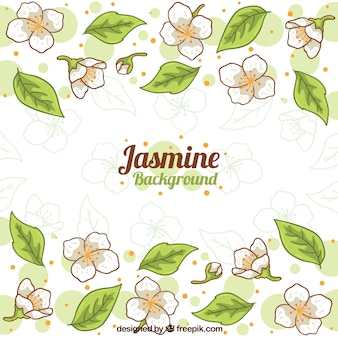 Hand drawn jasmine background with leaves