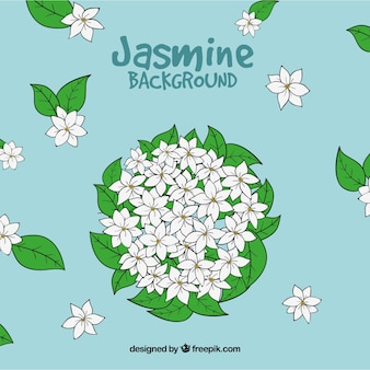 Hand drawn jasmine background
