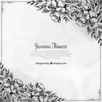 Hand drawn jasmine background