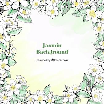 手描きのジャスミンの背景