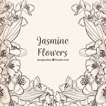 Hand drawn jasmine flowers with sketchy style