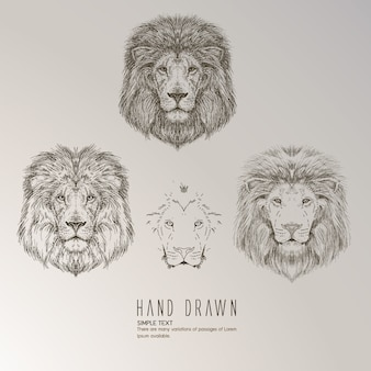 Hand drawn lion's head