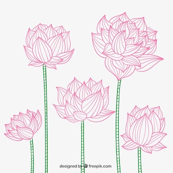Hand drawn lotus flowers