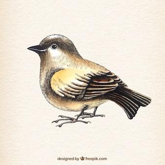 Hand drawn natural bird