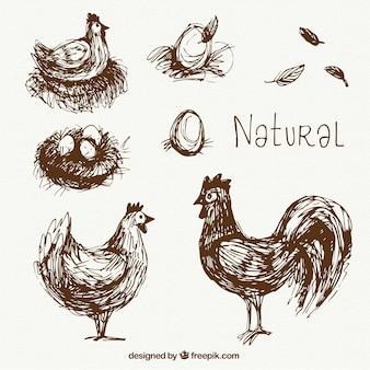 Hand drawn natural hens