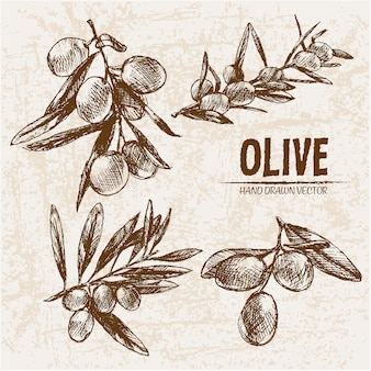 Hand drawn olives