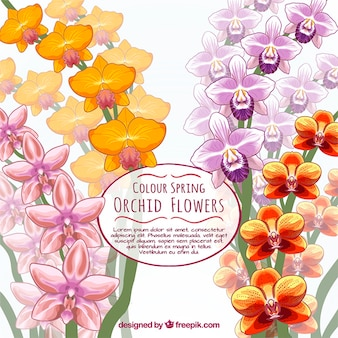 Hand drawn orchid card