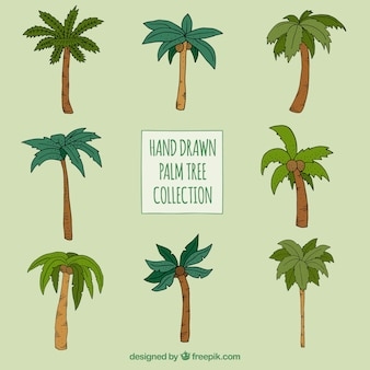 Hand drawn palm trees set of different types
